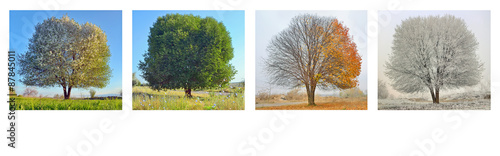 Fotografía  alone tree in four season