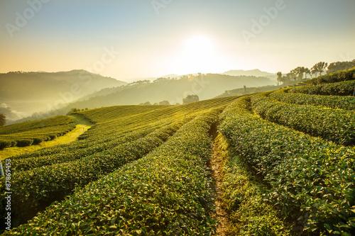 Photo  Sunrise view of tea plantation landscape at 101 Chiang Rai Tea,N