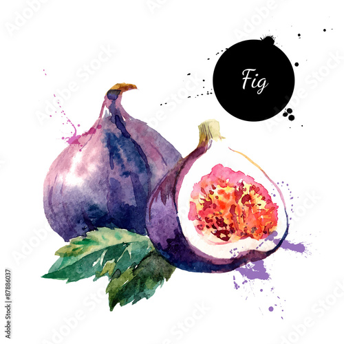 Stampa su Tela Hand drawn watercolor painting fruit fig on white background