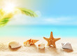 seashells on the sandy tropical beach and palm