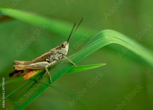 cute grasshopper Wallpaper Mural
