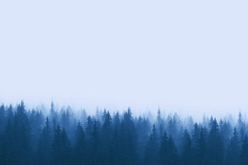 Fototapeta Landscape in blue tones - pine forest in mountains with fog