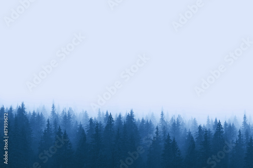 Landscape in blue tones - pine forest in mountains with fog