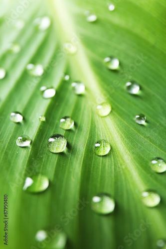 zielony-lisc-z-kropelkami-zblizenie