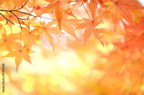 Fotobehang Zwavel geel モミジの紅葉