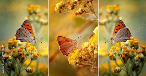 Fototapety, obrazy: Motyle wśród kwiatów