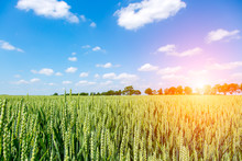 Sunset Above Wheat Field