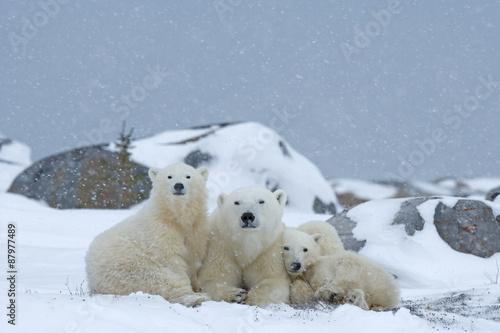 In de dag Ijsbeer Eisbärin mit Jungen
