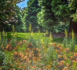 Fototapeta Ogrody Flowers