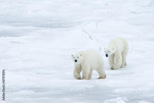 Tuinposter Ijsbeer Eisbären
