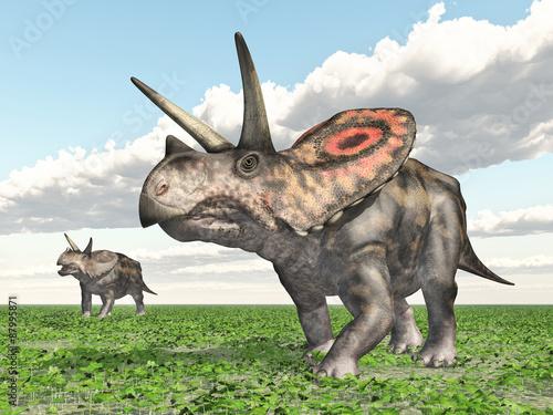 dinosaur-torosaurus