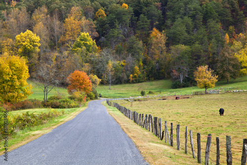 Aluminium Prints Autumn Cow Pasture Beside a Road in the Fall