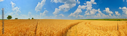 Poster Miel Wheat field panorama