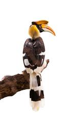 Yellow Billed Hornbill Great Hornbill, Great Indian Hornbill, Gr