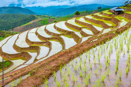 Garden Poster Rice fields Rice terraced.