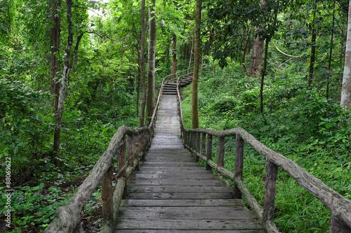 Foto op Canvas Weg in bos Footpath / Footpath along the Buatong waterfall,Thailand