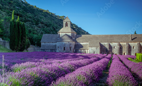 Fototapety, obrazy: Lavender in front of the old abbey of Senanque in Provence