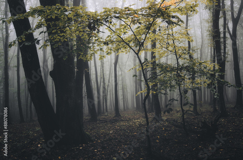 Foto op Plexiglas Landschappen orange tree in forest in autumn