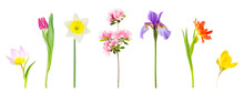 Spring Flowers Isolated On Whi...