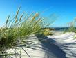 Düne mit Dünengras am Meer