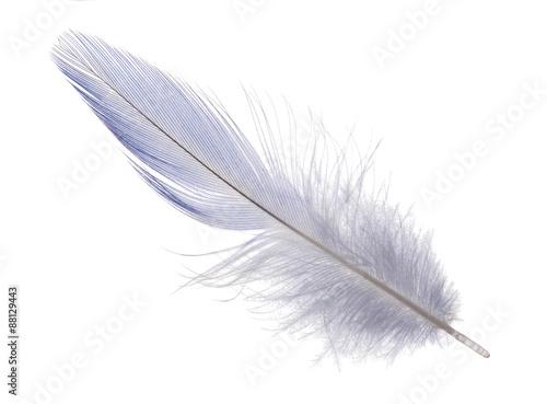 jasnoniebieskie długie pióro na białym tle
