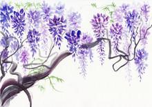 Wisteria Blossom