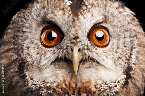 Owl, nocturnal, feathers.