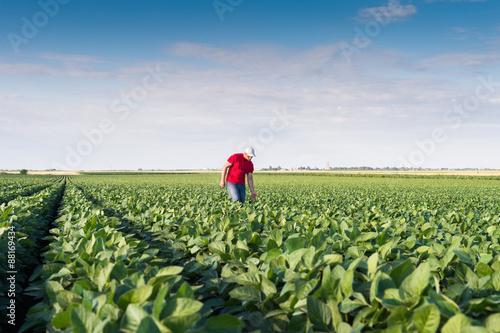 Photo farmer in soybean fields