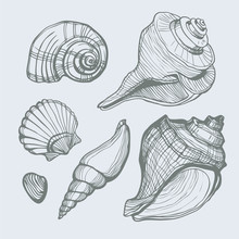 Vector Set With Hand Drawn Sea Shell Isolated. Vector Illustration