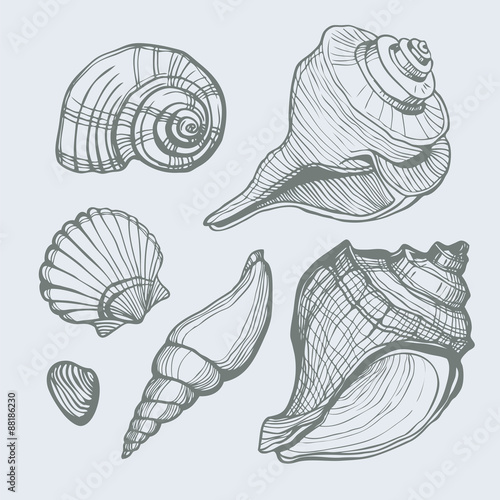 Fotografía  Vector set with hand drawn sea shell isolated