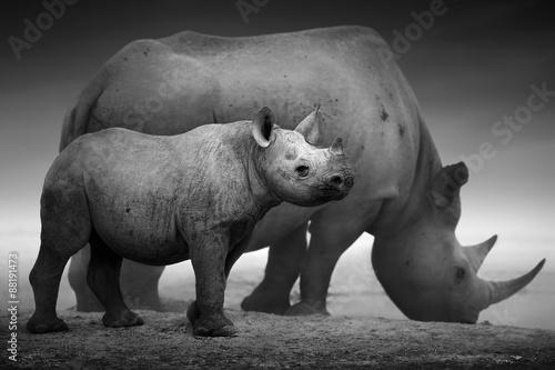 Spoed Foto op Canvas Neushoorn Black Rhinoceros calf and cow