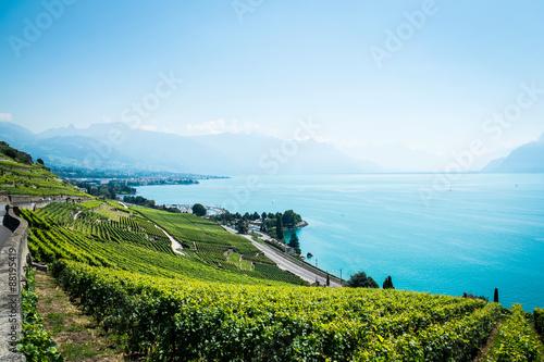 Vineyards of the Lavaux region over lake Leman (lake of Geneva) Wallpaper Mural