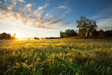 Tranquil Grassland And Trees At Sunrise