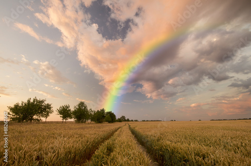 Poster Miel colorful rainbow over the field
