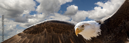 Poster Aigle composite of a bald eagle flying in a cloudy sky