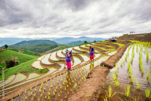 Poster Rijstvelden Hmong woman with rice field terrace background