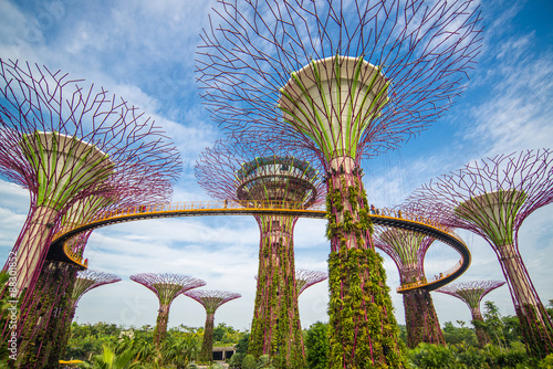 Tuinposter Singapore The Supertree at Gardens by the Bay