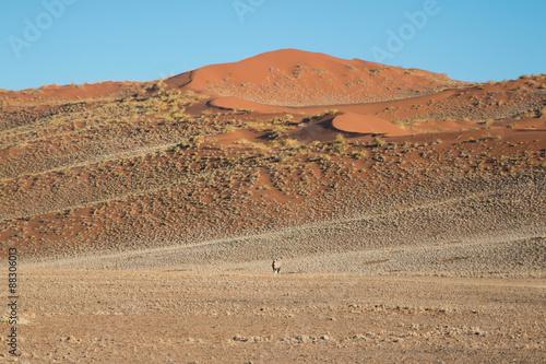 Fotografie, Obraz  Red sand dunes in Sossusvlei, Namibia