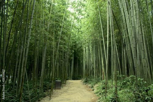 Poster Bamboe 대나무숲