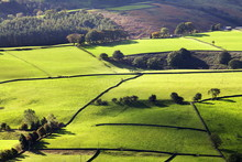 Fields And Dry Stone Walls In Nidderdale, Pateley Bridge, North Yorkshire, Yorkshire
