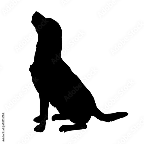 Valokuva  Vector silhouette of a dog.