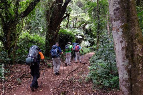 Tuinposter Alpinisme Forest walk, on mount Kilimanjaro