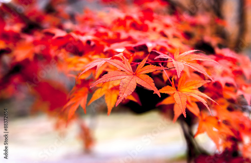 Foto op Canvas Herfst bright autumn leaves in the natural environment