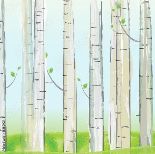 Aspen forest. vector