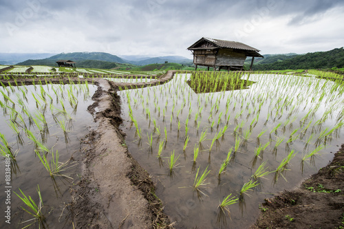 In de dag Rijstvelden Green Terraced Rice Field in Pa Pong Pieng in raining season, Mae Chaem, Chiang Mai, Thailand