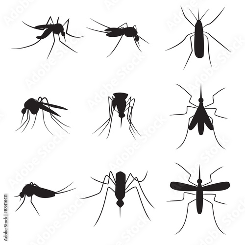 Set of black silhouette carrier mosquitoes isolated on white bac Tapéta, Fotótapéta