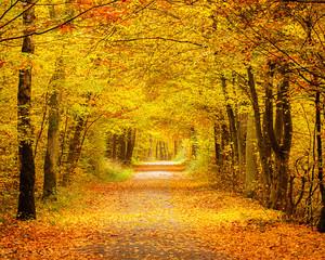 Fototapeta Optyczne powiększenie Autumn forest