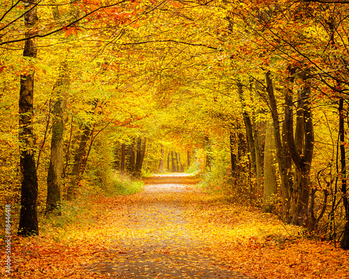 Poster Weg in bos Autumn forest