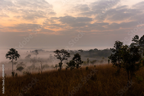 Fotobehang Zwavel geel Savanna meadow and pine forest