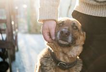 Man And His German Shepherd Dog